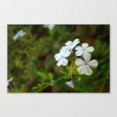 White little flower Canvas Print