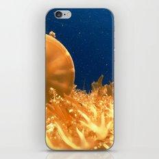 Sea Jellies iPhone & iPod Skin