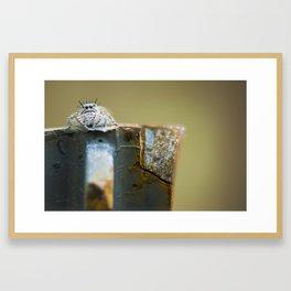 SPIDER DONT JUMP Framed Art Print