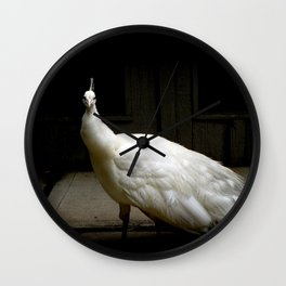 Elegant white peacock vintage shabby rustic chic french decor style woodland bird nature photograph Wall Clock