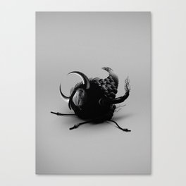 INSECT_2 Canvas Print