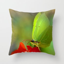 Brimstone Butterfly 45 Throw Pillow