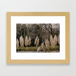 Cortaderia Framed Art Print