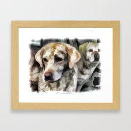 Labradors fun in the mud Framed Art Print