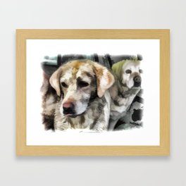 Labradors fun in the mud Framed Art Print