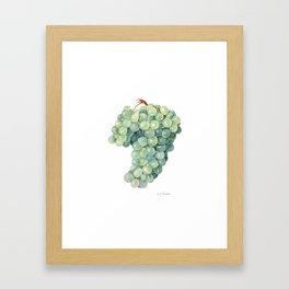 Green Grape Framed Art Print