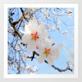 plum tree blossoms closeup Art Print