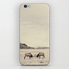 Sparring Elk in Wyoming - Wildlife Photography iPhone & iPod Skin