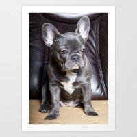 french bulldog Art Prints featuring French Bulldog by Falko Follert Art-FF77