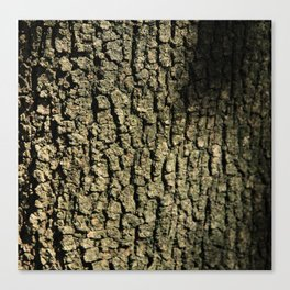 Barking Up the Right Tree Canvas Print