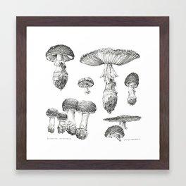 Amanita Muscaria Mushroom Study Framed Art Print