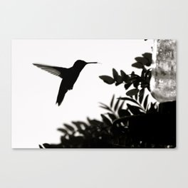 Unrivaled Canvas Print