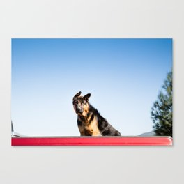 Dog Eared Canvas Print