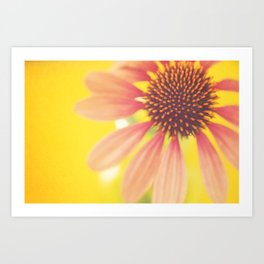 Pink Sunshine Art Print