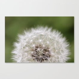 One Heart, Many Wishes  Canvas Print