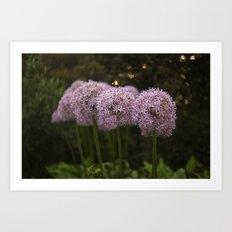 Purple Allium Ornamental Onion Flowers Blooming in a Spring Garden 2 Art Print
