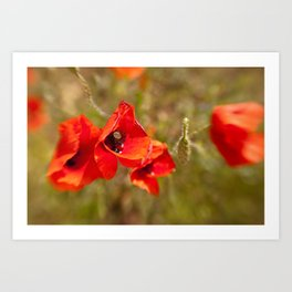 Poppies by Boone Speed Art Print
