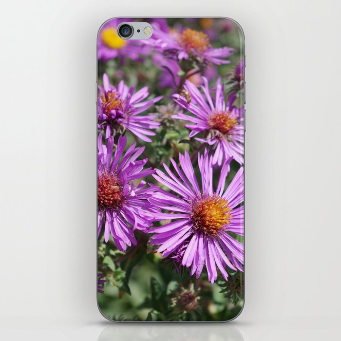 Autumn Amethyst - New England Aster flowers iPhone Skin