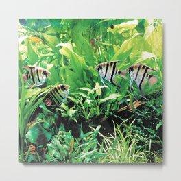Teardrop Angelfish Metal Print