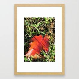 A Unique Red Leaf Framed Art Print