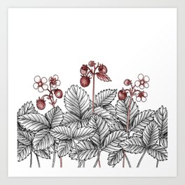 Wild Strawberries Art Print