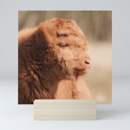 Fluffy Scottish Highland Calf | Animal Photography | Scottish Highland Cow Baby Mini Art Print