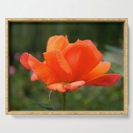 Orange English Rose Serving Tray