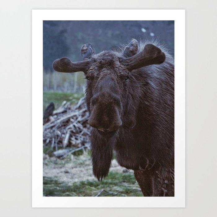 Friendly Moose Art Print