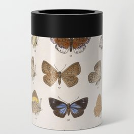 Vintage Scientific Insect Butterfly Moth Biological Hand Drawn Species Art Illustration Can Cooler