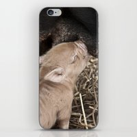 piglet iPhone & iPod Skins featuring Piglet by Rachel's Pet Portraits