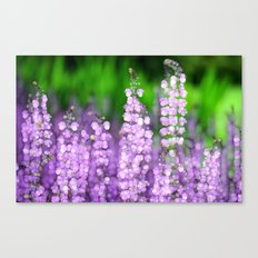 Salvia Canvas Print