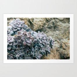 Botanical Gardens II - Succulents #557 Art Print