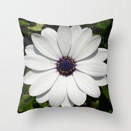 Beautiful Blossoming White Osteospermum  Throw Pillow