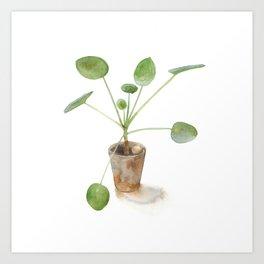 Pilea. Chinese money plant. Art Print