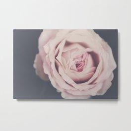 french rose Metal Print