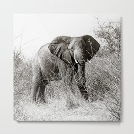 elephant in the bush Metal Print