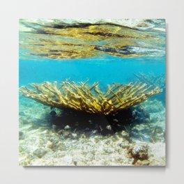 Watercolor Sealife, Elkhorn Coral 01, St John, USVI, Watch Your Step! Metal Print