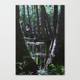 MISSISSIPPI SWAMP Canvas Print