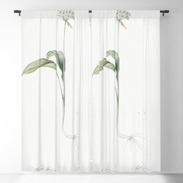 Ramsons  from Les liliacees (1805) by Pierre Joseph Redoute (1759-1840) Blackout Curtain