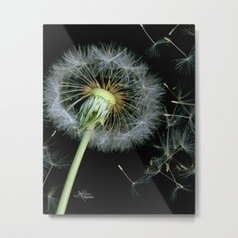 Dandelion Seeds Blowing in the Wind, Scanography Metal Print