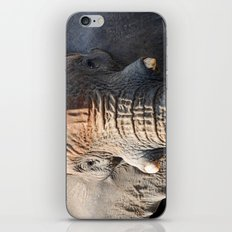 African Elephant 1 iPhone & iPod Skin