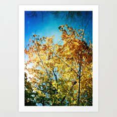 Rainbow of leaves Art Print