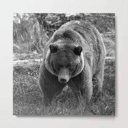 Grizzly Bear - B & W Metal Print