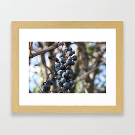 Wild Grapes Framed Art Print