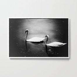 Two swans on lake Huron Metal Print
