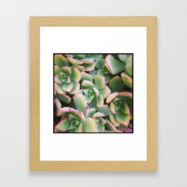 Dana Point Succulent 5 Framed Art Print
