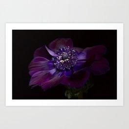 "Anemone Coronaria de Caen ""Bordeaux"" Art Print"