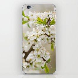 Blooming Cerasus cherry tree twig iPhone Skin