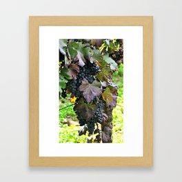 Grapes/Traube Framed Art Print