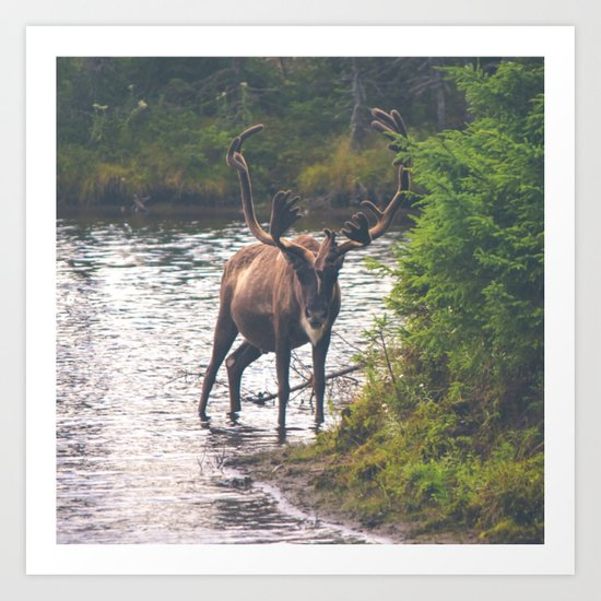 Moose in the River (Forest Wildlife) Art Print